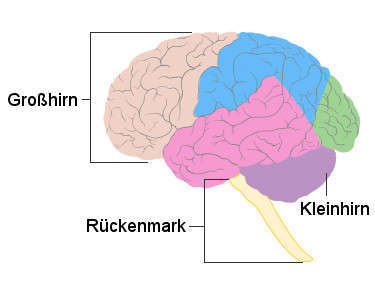 Gehirnareale für Visuomotorik Schema