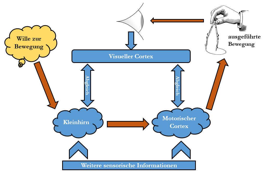 Visuomotorik Hand Auge Koordination Prinzip